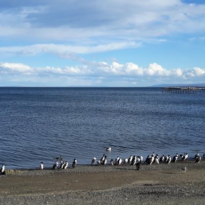 Punta Arenas_5